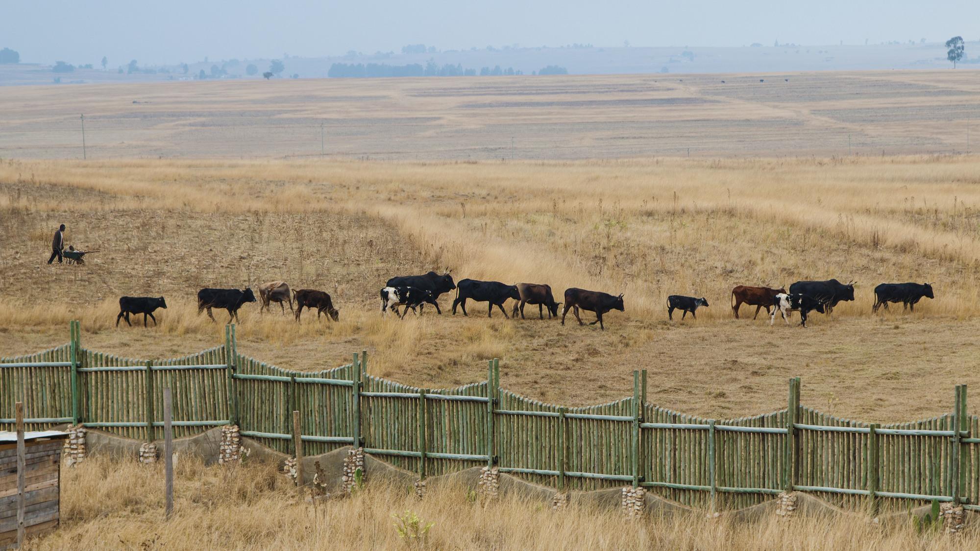 レザー 種類 牛
